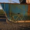 Vélo Vintage Genesis Brixton Gold