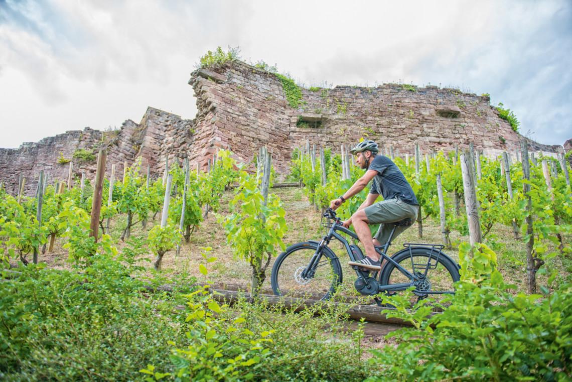 Randonneur à vélo au milieu des vignes
