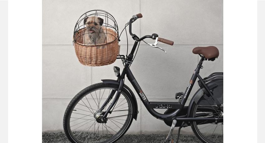 comment transporter son chien v lo. Black Bedroom Furniture Sets. Home Design Ideas