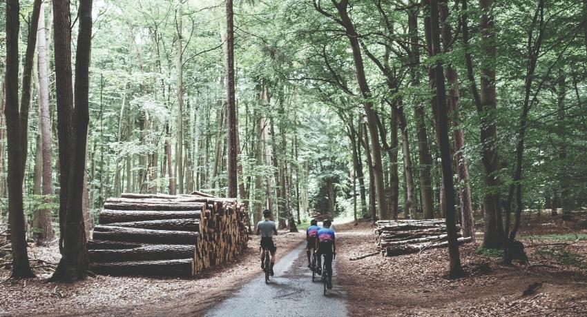 Groupe de coureurs cyclistes avec des vélos électriques de course en forêt