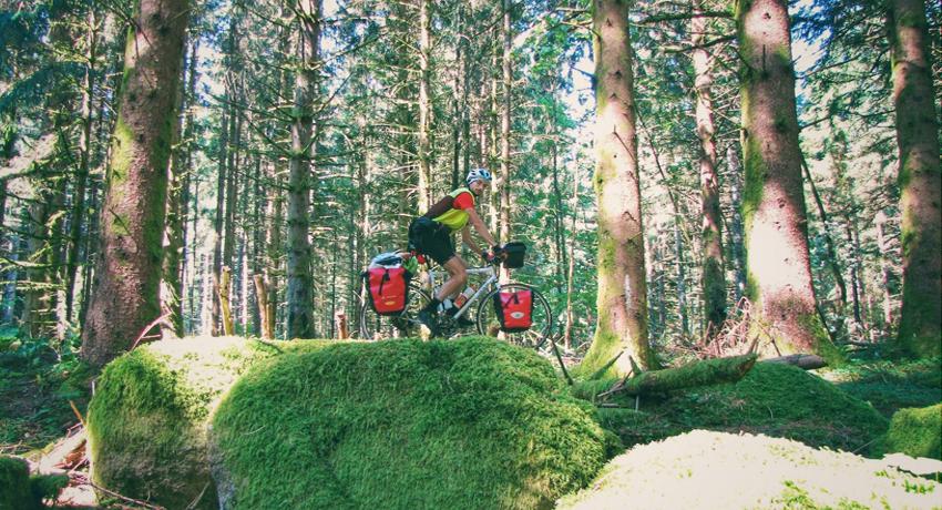 Cyclotouriste dans la forêt vosgienne